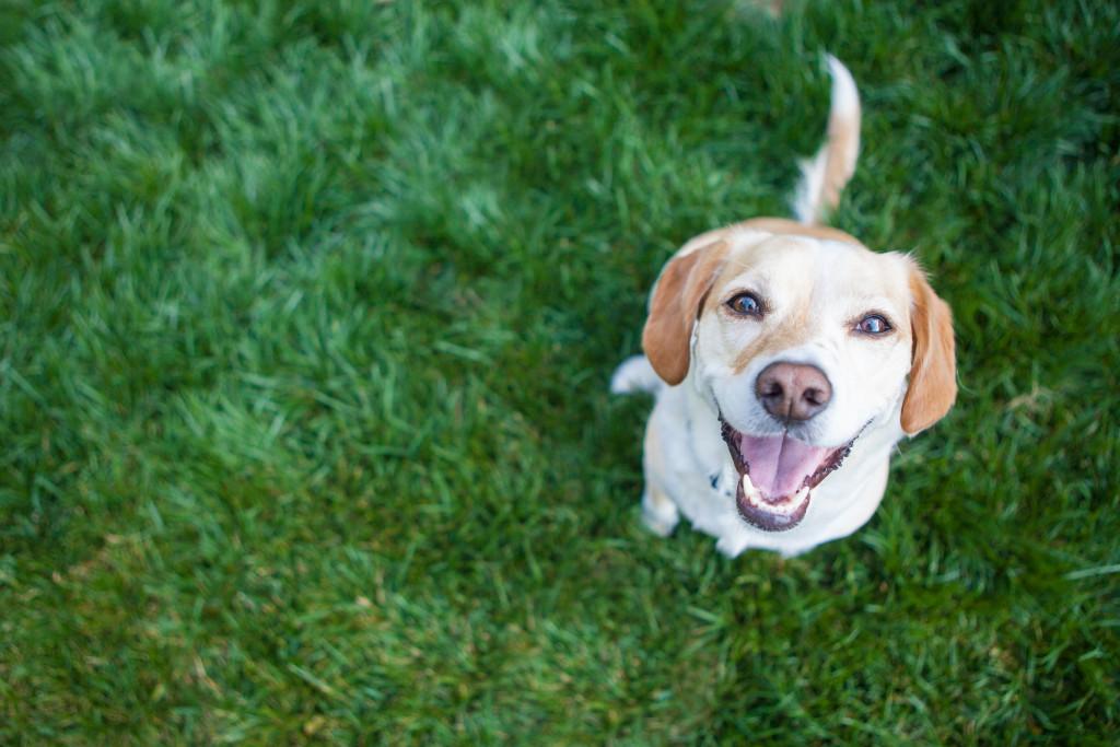 dog sitting on grass